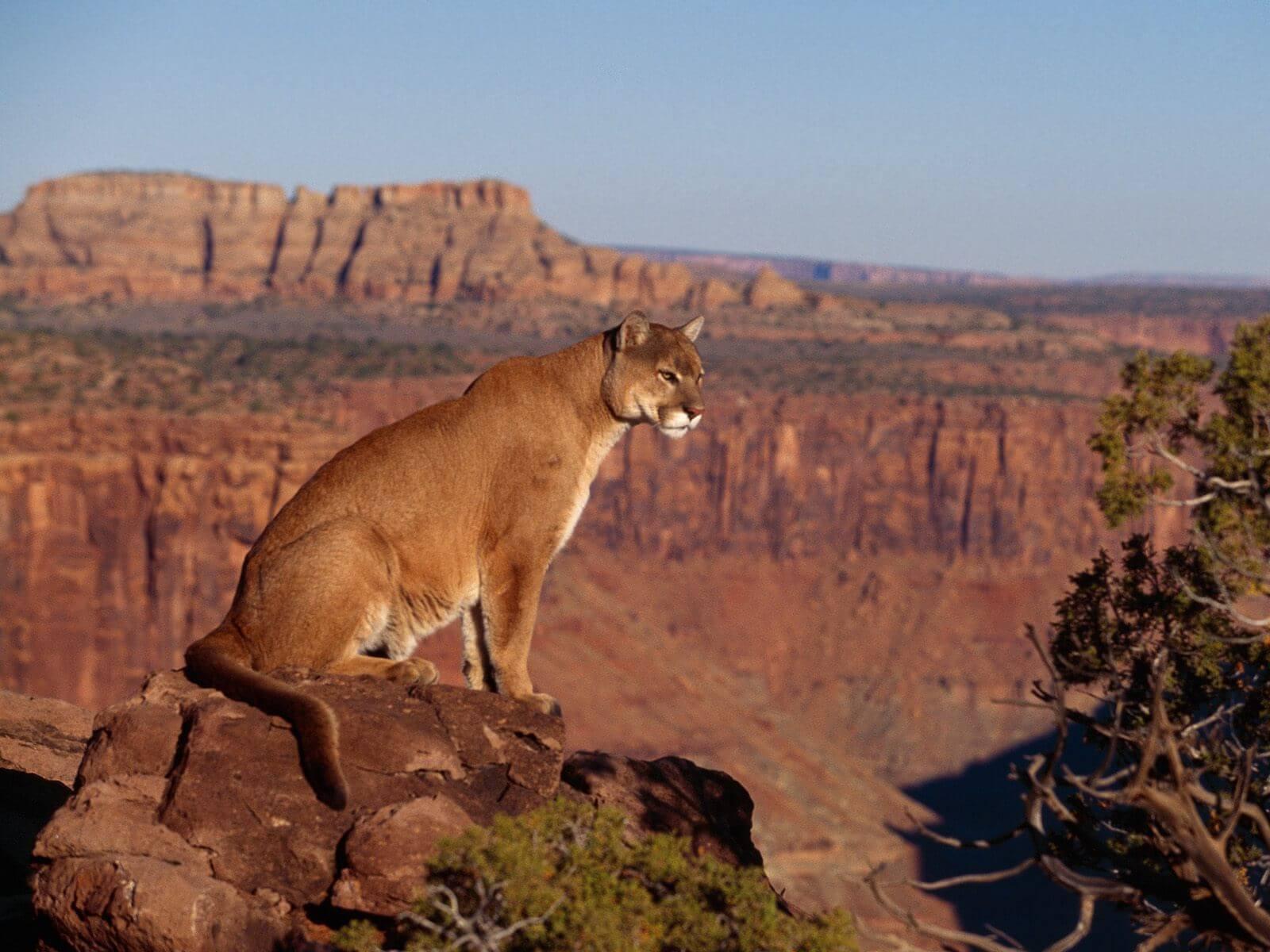 Zwierzęta występujące w kanionie?